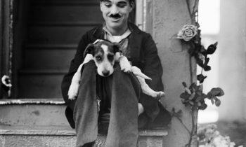 Vida de perro, de Charlie Chaplin. Vean aquí la película.