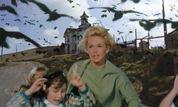 Lumínicas presenta: Pájaros en el Ático. Escribe Juanita Porras.